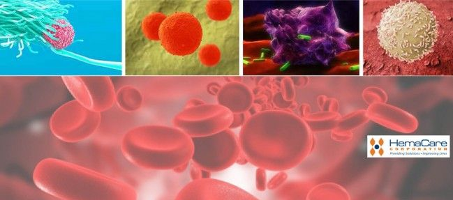 tebu-bio is pleased to bring you HemaCare's variety of high-quality, controlled, consistent, viable Human primary cells and blood components derived from an assortment of tissues. Benefit from the experience of a cell processing lab capable of purifying lymphocytes, monocytes, neutrophils, CD34+ stem cells, and much more!