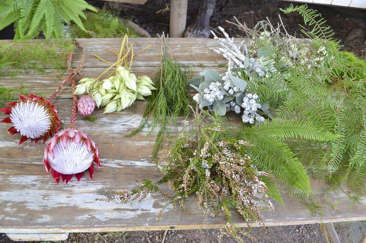King red protea, Bribie pine, Tetragona nuts, Sea star fern, Umbrella fern, Thryptomene, Waxflower, Koala fern and Goanna claw