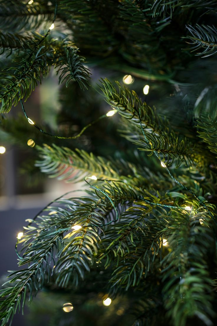 33 best Christmas | Tree Lights images on Pinterest | Christmas time ...