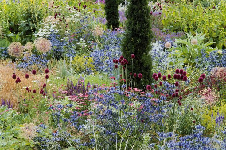 Eryngium, Allium, Salvia, Achillea. Broughton Grange | Tom Stuart-Smith. Those Eryngiums are so vibrant and the colour works beautifully with the Allium sphaerocephalon.