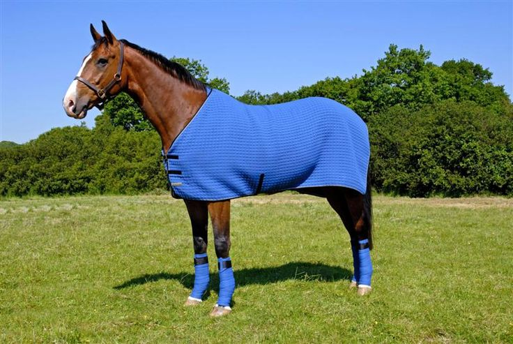 Manta azul para caballos. #Horse