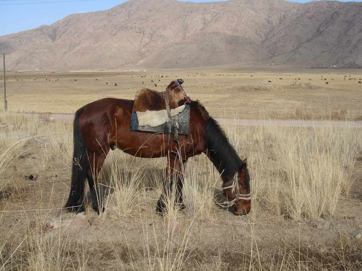 the domesticated horse essay The behavior problems of horses are frequently related to management prac-   of free-ranging and domestic horse herds is reviewed in order to compare it with  the  essay topics (either broader or more specific) may be selected include.