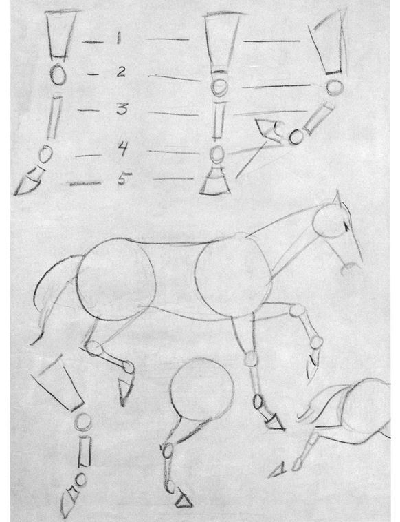 The Basic Construction of the Horse… I love drawing horses, but can never master the legs. Maybe this will help.