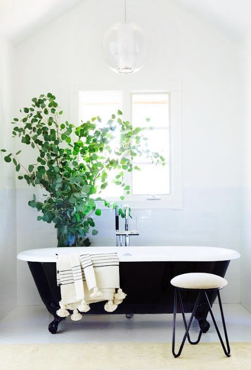 This simple black and white bathroom is brought to life with a simple vibrant green shrub.