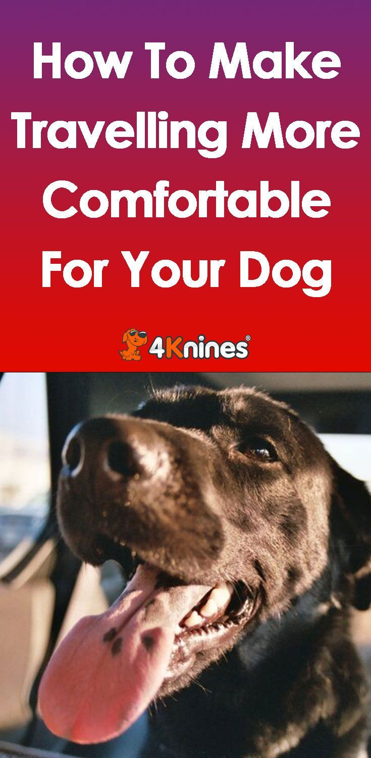 How To Make Traveling More Comfortable For Your Dog Dog Training