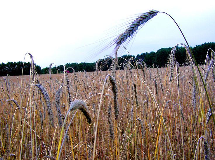 field somewhere