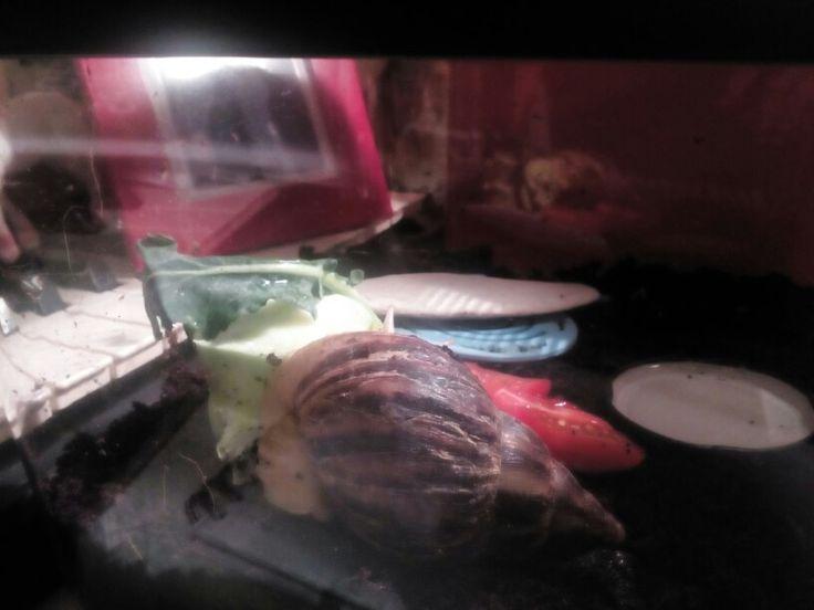 Broccoli!!!!