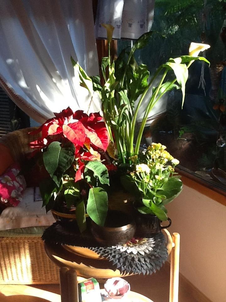 Mis flores de Navidad....