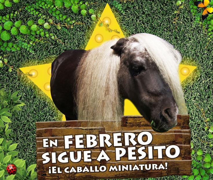Si quieres seguir a una estrella, está es la oportunidad perfecta, entra y conoce la vida fabulosa de Pesito.