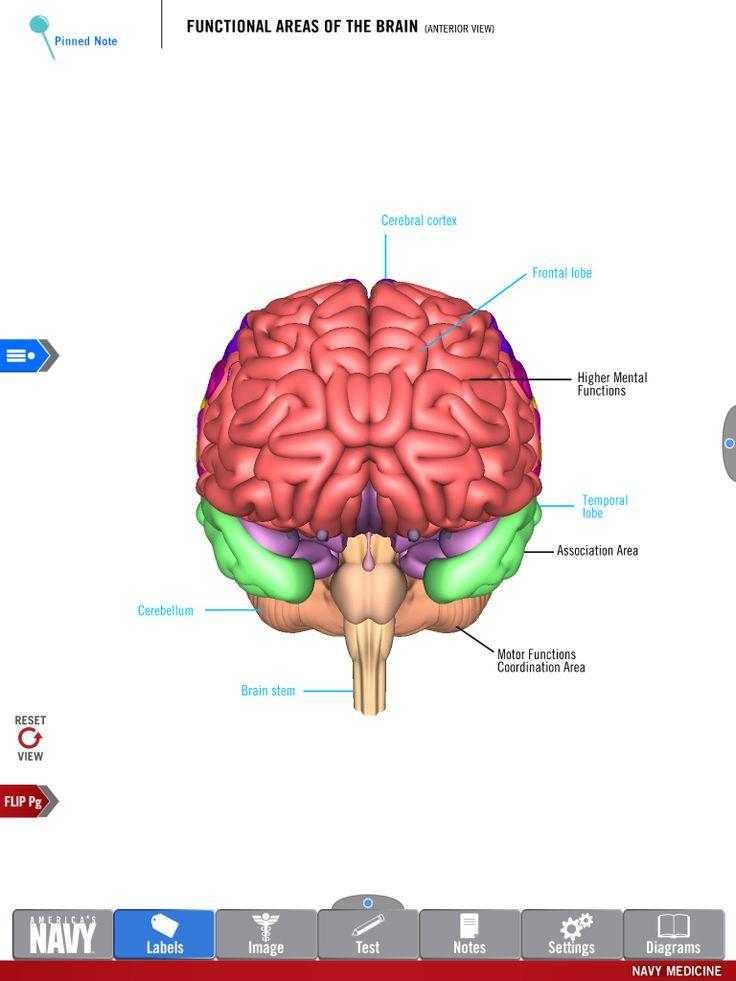 Anatomy & Physiology - The Biology Corner