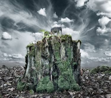 "Saatchi Art Artist David Heger; Photography, ""A Bit of Wilderness in the Bohemian Forest - Limited Edition 1 of 20"" #art"