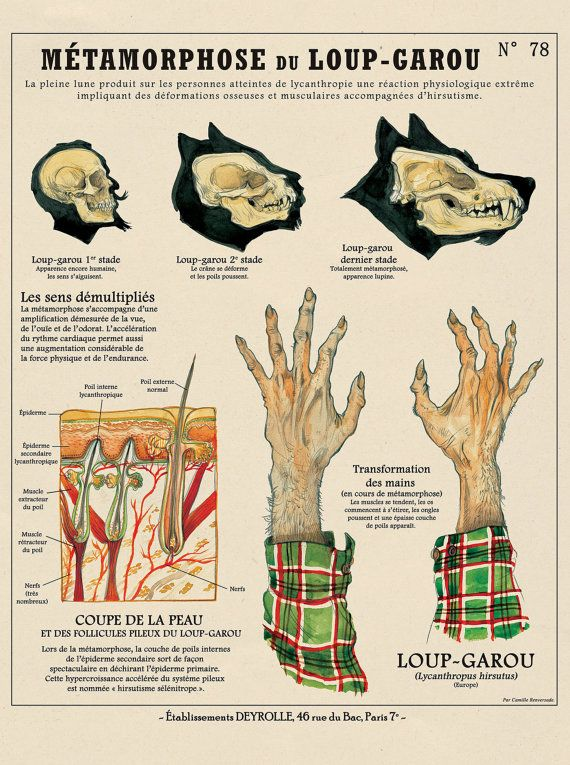 Planche Créatures Fantastiques Deyrolle : Métamorphose du Loup-garou