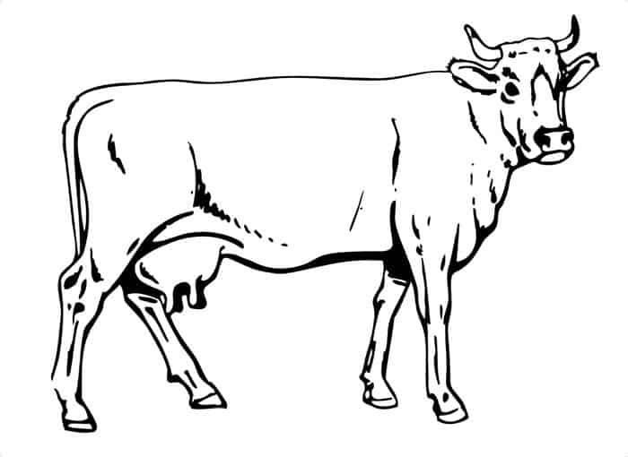 Cow Coloring Pages In 2020 Cow Coloring Pages Farm Coloring