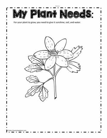 Plant Needs Worksheet. Add things a plant needs to the