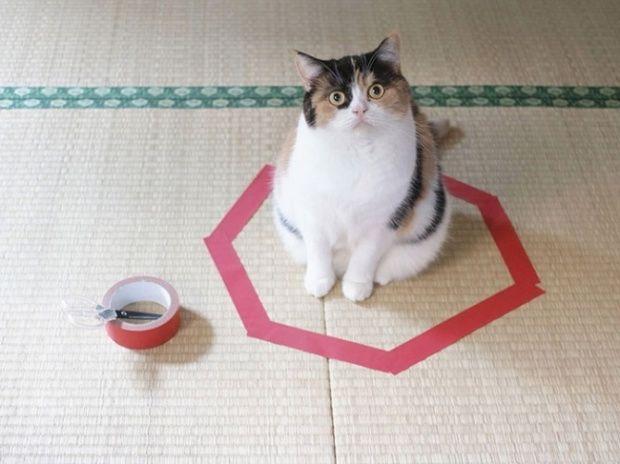 #животные #кошки #кот #факты #истории #всевшоке #vsevshoke Как поймать кота в ловушку. Люди, у которых есть кот в доме, провели эксперимент. животные, домашние питомцы, юмор, юмор коты, коты юморные, кот смешной http://vsevshoke.com/kak-poymat-kota-v-lovushku/