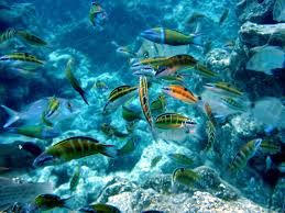 Image result for Angthong National Marine Park