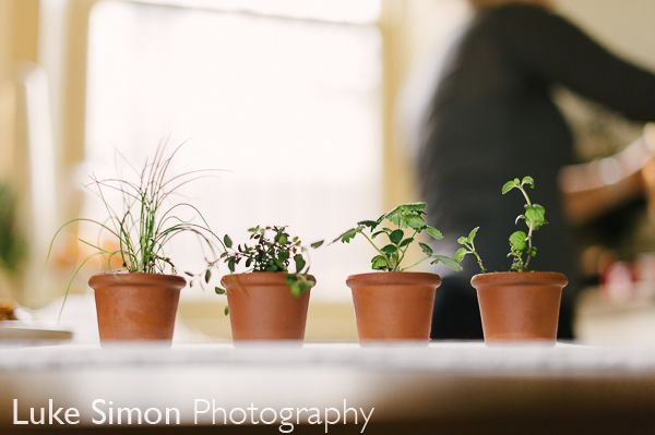 TABLE | MANTLE | PANTRY Terracotta Tealight Seedlings  PLANT ME | EAT ME | KEEP ME | LIGHT ME put the seedling in your garden & a tealight will fit in me  Part of our Guest favour range