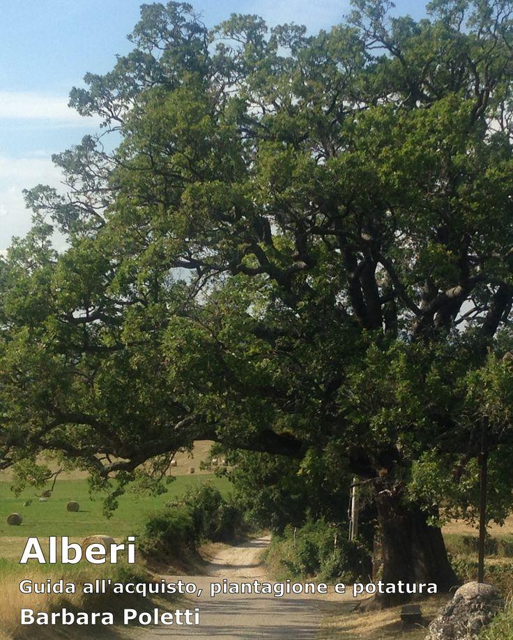 eBook gratuito per orientarsi nell'acquisto di esemplari sani e di buona qualità e per la successiva cura degli alberi. Anche su Apple store: https://itunes.apple.com/it/book/alberi/id935729855?mt=11