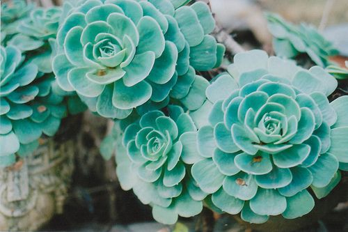 #plants succulent garden houseplant teal