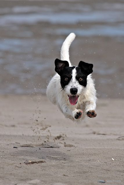 A love that includes keeping them safe, healthy, happy and wagging their tails for years to come. www.myhealthypup.com