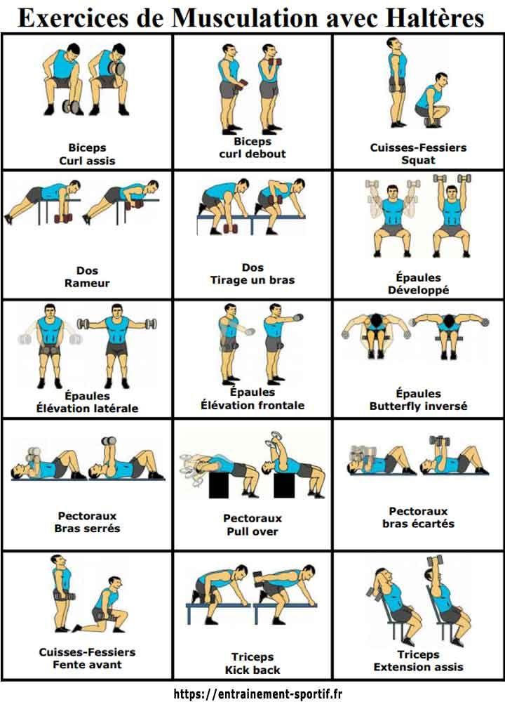 15 Dumbbell Exercises Musculation Avec Halteres Programme Musculation Homme Exercice Musculation Haltere