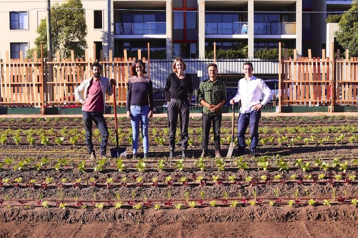 Scoring a patch of dirt to start an urban farm in Sydney is no mean feat. But…