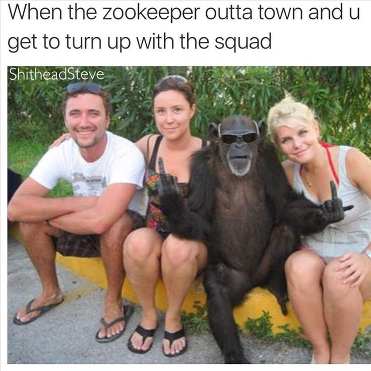 Best Funny Animals Images On Pinterest Funny Animals - 20 hilarious photos of what zookeepers get up to after closing hours