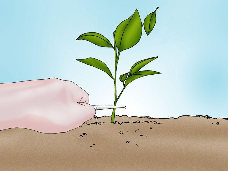 How to Grow a Peony in a Pot -- via wikiHow.com