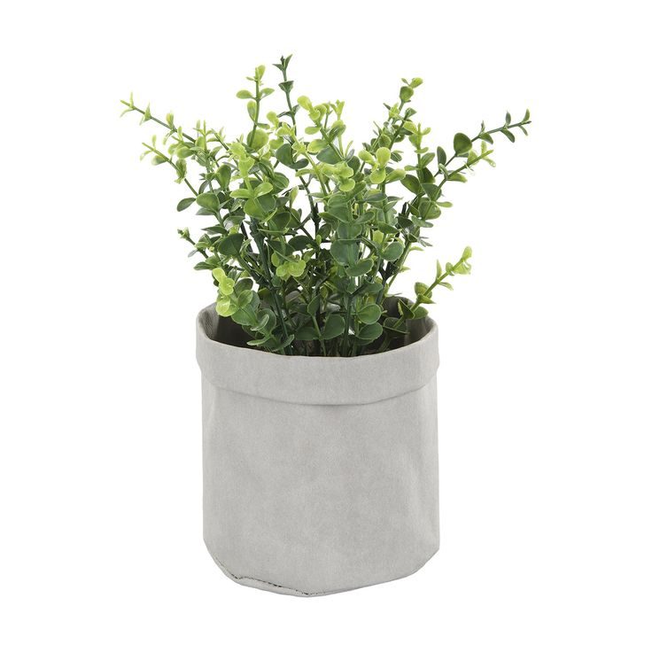 Plant in Pouch | Kmart