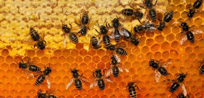 #energie boost #recept voor #sportvoeding met #honing http://www.x6sports.com/recept-sportdrank-met-honing-voor-blender-bottle/