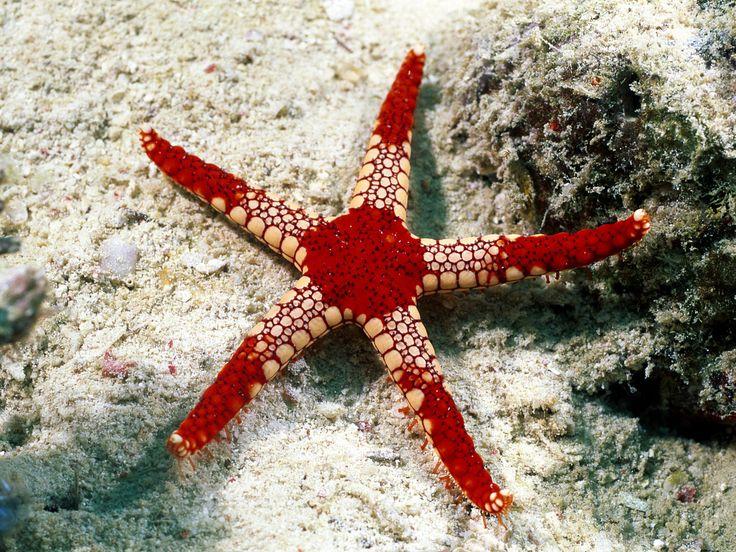 stella, stella marina, starfish, abissi, abiss, colour, wonderful, colori, fondale marino, mare, sea, profondità, creature marine, sea creature, under the sea, sotto al mare,