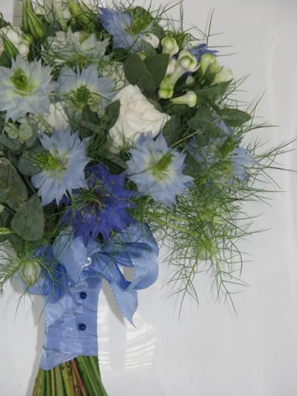 Nigella (Love-in-a-mist; Devil-in-a-bush) | A to Z Flowers