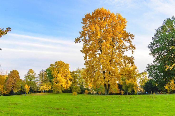 Bevor Du im Herbst fotografieren gehst, solltest Du Dir Gedanken zu Kamera, Stativ und Kleidung machen. Wir zeigen Dir, worauf Du achten solltest.