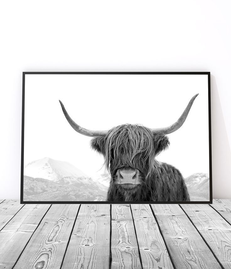 highland cow print black and white cow