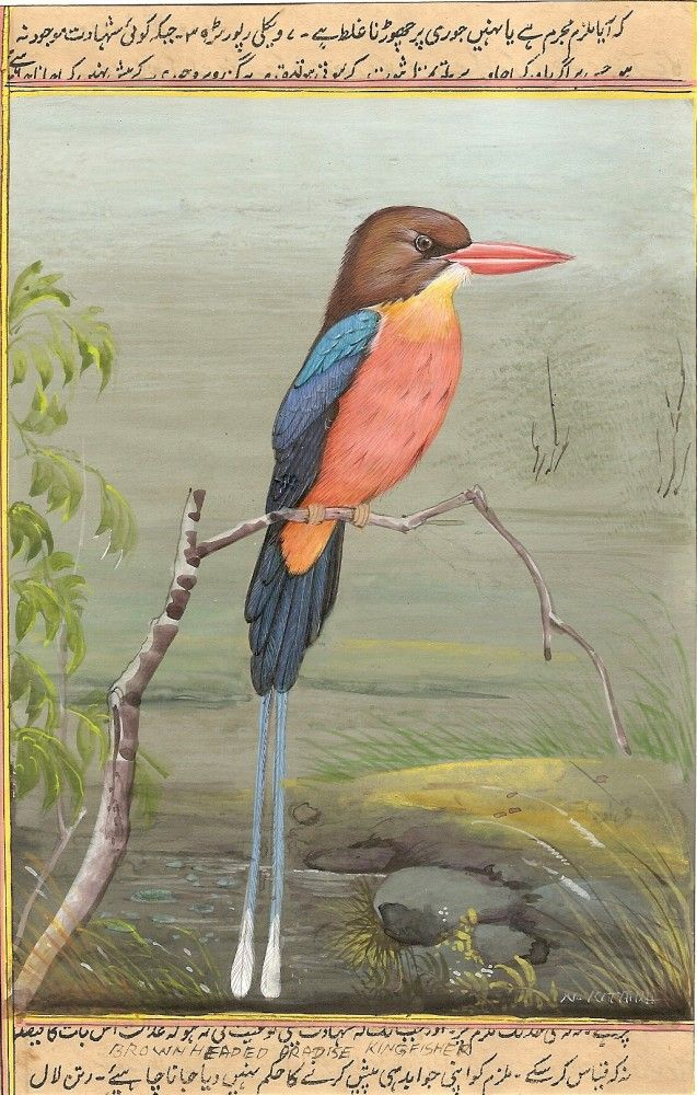 Brown Headed Russet Paradise Kingfisher Art. This image was painted by famous Jaipur wild life miniature artist, Mr. Narendra Katara.