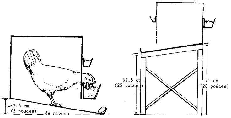 Elevage pratique de la volaille (Peace Corps, 1981, 289 p