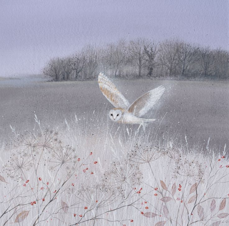 Owl art by Lucy Grossmith