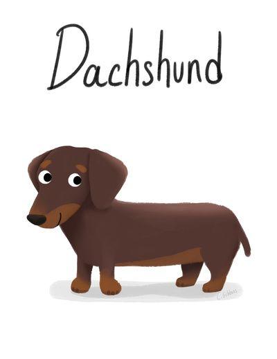 Dachshund - Cute Dog Series Stretched Canvas
