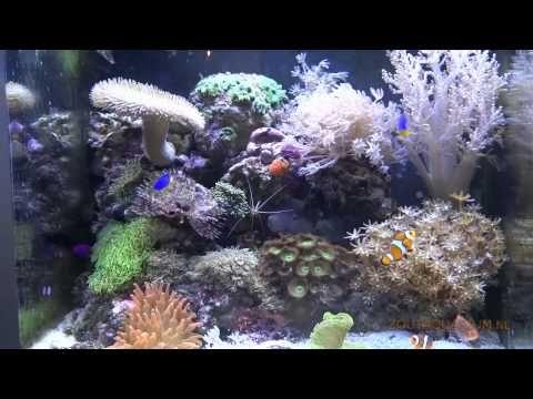 Het zeeaquarium een mooi klein zee onderwater wereldje met zoutwatervissen en ongewervelde zeedieren, een prachtig kleurrijk aquarium in de kamer.