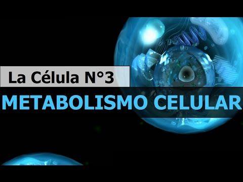 Metabolismo celular - anabolismo y catabolismo  Todo sobre la Célula 3  Biología - YouTube