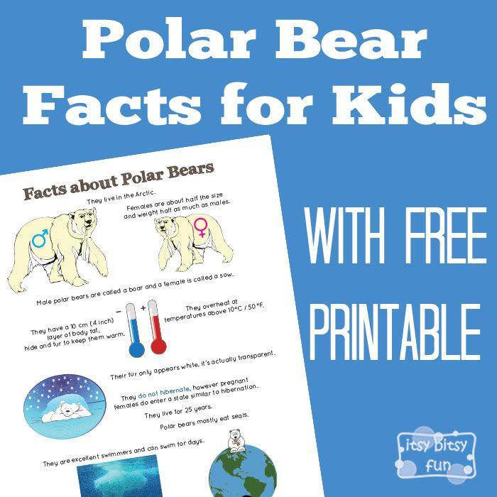 25+ best Polar Bear Facts ideas on Pinterest | Polar bears for ...