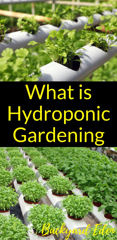 What is hydroponic gardening | Hydroponics | DIY Hydroponics | Hydroponics for beginners | Indoor Hydroponics | Hydroponic Wall | Hydroponic System | Hydroponic Gardening | Homemade Hydroponic systems | Hydroponic Nutrients | Kratky Hydroponics | Greenhouse Hydroponics | Hydroponics Design | Hydroponic Vegetables | Backyard-Eden.com #hydroponicslettuce #hydroponicsgardening