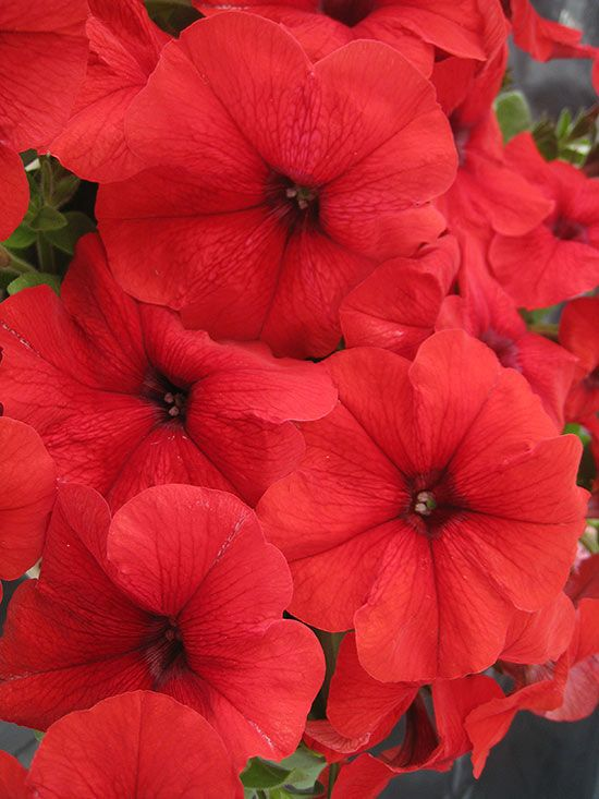 New Garden Ideas 2015 92 best new flowers introduced for 2015 images on pinterest