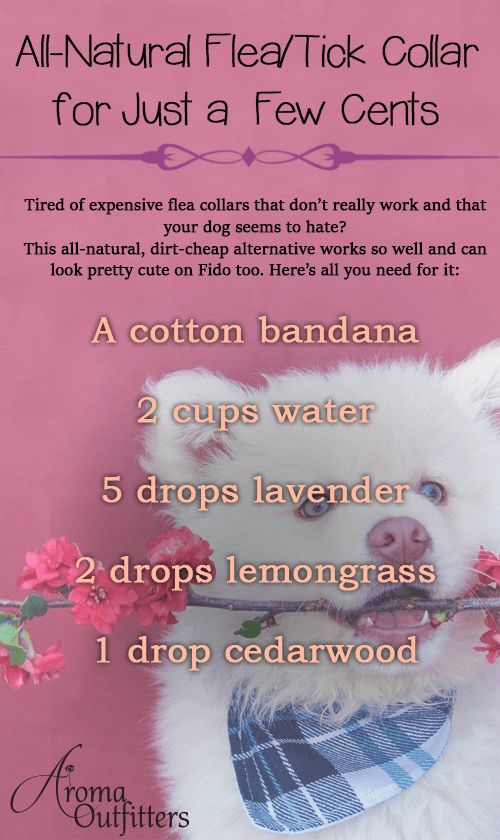 Are essential oils safe for your pets? These are our favorite Essential Oil tips and recipes for your pets.