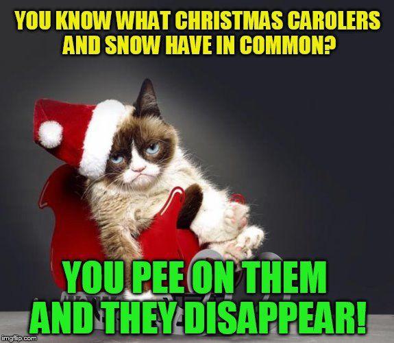 Funny Memes Grumpy Cat Pinterest Grumpy Cat Cats And