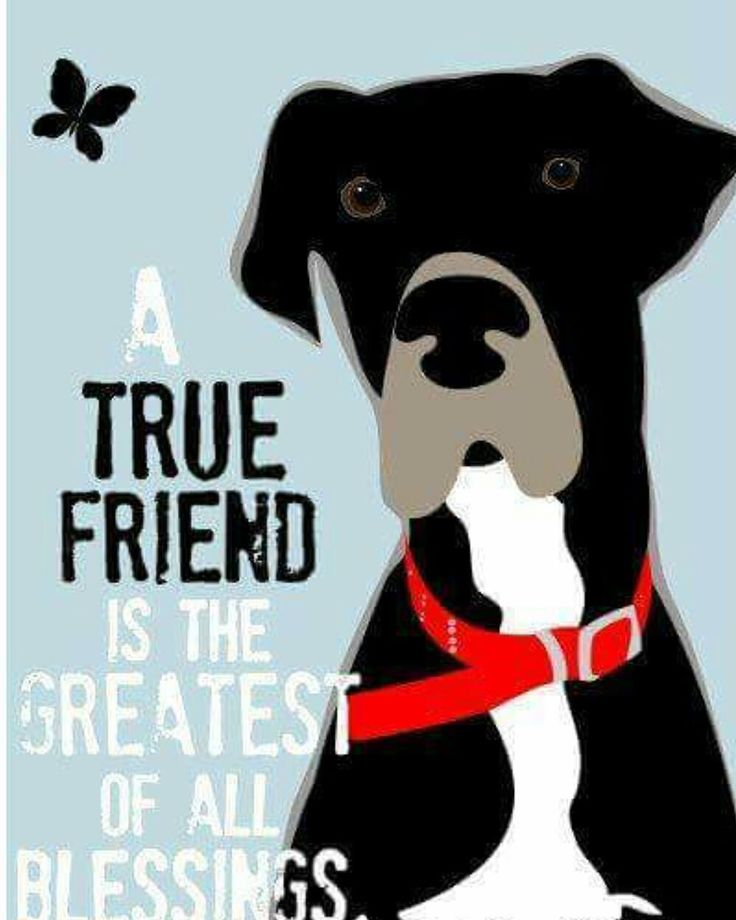 Are you blessed with a true friend? See our bio for a link to our website to see if your true friend is waiting for you!  #addadanetoyourlife #adoptdontshop #rescue #rescuedanes #rescuedog #lookingforafamily #bestfriend #greatdanesofinstagram #gentlegiant #giantbreedlovers #giantbreed #greatdanesunleashed #greatdanes #greatdanecommunity #greatdanelove #greatdanesunlimited #greatdane #greatdanesofinstagram #bigdogsrule #bigdogs #foreverfamily #lovemydane #milehighdanes #danesofinstagram #dane…