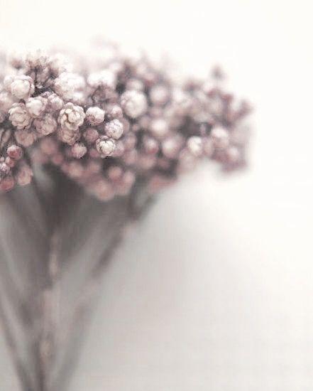 Pantone Color, Mauve, Lilacs, Flower Power, Plum, Roses, Blossoms, Lilac  Bushes, Syringa Vulgaris