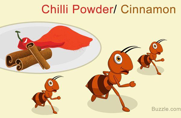5c5bcaa3145ede08d5ad102022608a32 - How To Get Rid Of Ants In Food Cupboard