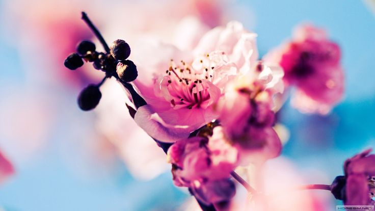 #wallpaper #ilkbahar #çiçek #flowers #spring