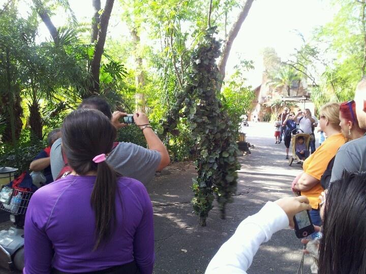 Stilt Walker at Disney's Animal Kingdom